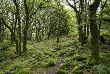 Une forêt au Pays de Gales