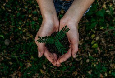 Deux mois après le début d'une grande campagne d'appel aux dons sur YouTube, des vidéastes ont réussi à récolter 20 millions de dollars. pour planter autant d'arbres