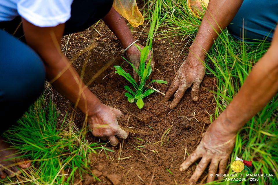 Des personnes mettant en terre un jeune plant , lors du coup d'envoi de la campagne de reboisement le dimanche 19 janvier 2020.