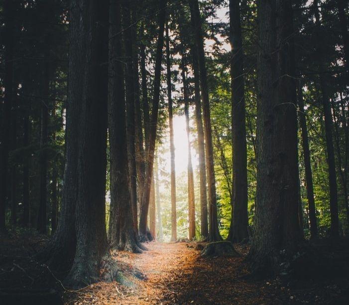 Une forêt luxuriante au Royaume Uni.