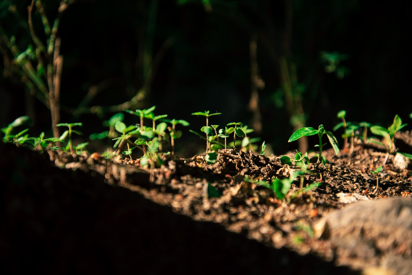 Des plants pour un reboisement.