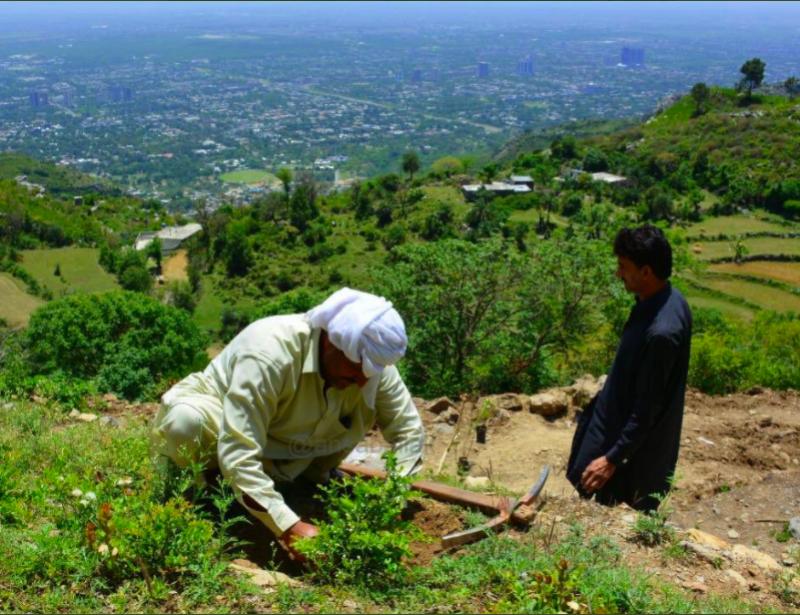 Deux Indiens plantant des arbres.