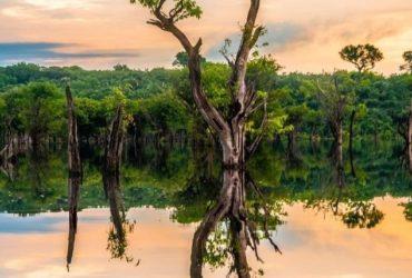 La forêt d'Amazonie, au Brésil.